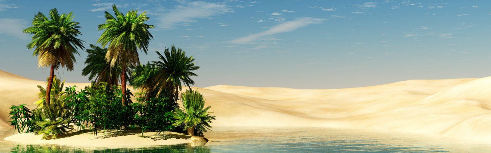 Begrünungen von Wüstenflächen